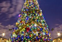 Christmas trees / by Wendy Costa