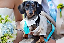 Ava and Jimmy's Wedding / by Ava Klinger