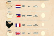 Chickens  / chickens & info / by Amanda Watkins