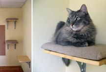 Cat DIY / by The Cat Solution