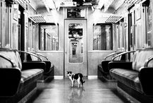 feline fine / by Kelley Liddicoet
