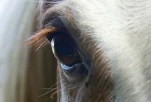 Horses / by Teya Leonard Quarmyne