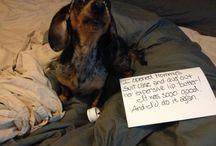 dog-shaming / by Valeria Huff
