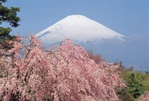 Mt. Fuji / by Carol Ann Simmonds