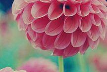 FLOWER POWER / by Sabrina Kluba