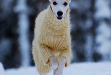Animals! Animals! Animals! / A group board just about animals! Pics, guides, useful stuff about or related to Animals only please! Follow and comment on a pin if you would like to join and help the Animals! Animals! Animals! Board / by The Dog Shop