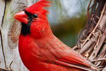 Birds - I love em! / by Julie Baxter