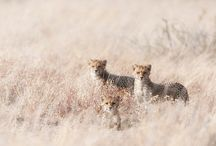Wildlife Photography / Using photography to capture wildlife around the world. / by The Nature Conservancy