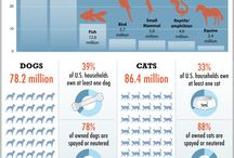 Fun Feline Facts / by Exclusively Cats Veterinary Hospital