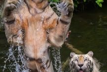 Wildlife / by Roy Berkenhamer
