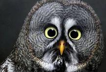 OMG Owls! / by Robyn Goldenberg