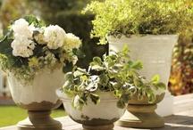 Gardening/outdoor spaces / by Novus Designs, By Nicole Fox