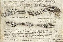 Anatomical / by João Henriques