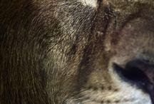 Beautiful wildlife / by Ben Waines