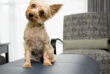 Pet Friendly Vancouver, Coast & Mountains / by Vancouver, Coast & Mountains