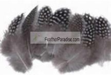 Fancy Loose Feathers / by Feather Paradise