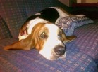 Basset Hounds!! / by Kim the Midwife