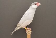 Bird brain / All types of bird images.  Put a bird on it! / by Dawn Krause