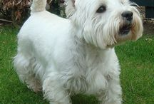 westies / by Sally Racher Rasmussen