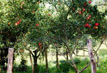 { Orchard } / by Kirsten Ivors