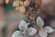 FLOWERS / by Nancy Sherwood