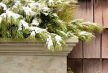 Winter Container Gardens / Klehm Arboretum  in Rockford, IL / by Klehm Arboretum & Botanic Garden