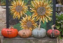 Fall  / by Sheila Humphrey