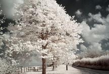 White as a snow / by Victoria Trifonova