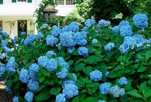 Garden / by Amy Dawkins