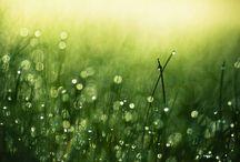 green! / green makes me happy / by Meleofa Baker