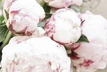 Flores / by Diana Ferrer herfort