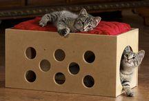 diy kitty/animal stuff / by Anne Birckelbaw