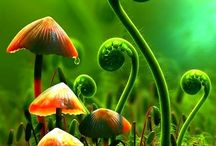 All Things Beautiful...Green and Orange... / by noelene ward