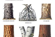 Learning about Trees / by Calvin College Ecosystem Preserve