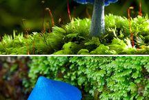 fungi highi / by Denese Henline