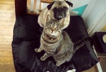 Man's best friend / We just love dogs (and cats)! Our Fatboy fans to. Here you can see the pictures we've got from them.  / by Fatboy