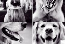 Pets / by Terri Jegerski