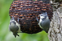 For the Birds / Birding tips and places to go for prime bird viewing - #birding  / by Becky at Crafty Garden Mama