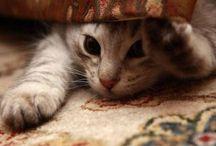 Cute Critters / by Sarah Vescio