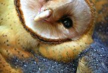 Owls / by Kayte Akkerman