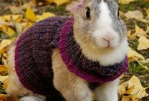 Cute Animals in Handknits (or handcrochets!) / Why is a cute animal even cuter in a handknit? / by The Studio Knitting & Needlepoint Shop