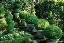 Garden / by Antoinette Chatham