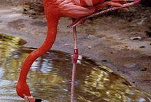 Flamingo / by abby rinker