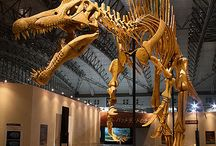 Dinosaurs, Marine reptiles, Pterosaurs, and other Prehistoric creatures  / by Kathryn Abbott