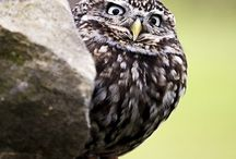 Bird Wild! / #wild #bird photos and just about everything related to #birding. If you follow and leave a comment I can add you. / by ARK Animals