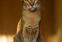 Here Kitty,Kitty..... / by Maria Arjonilla