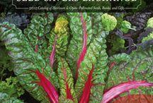 Seeds:Hard to Find / by Joyce Lloyd