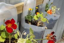 Garden Containers / Nooks and crannies and clever places to add plants / by Lorrie Scott