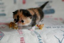 Cute, cuddly critters / by Riley Cullen