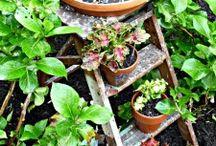 Garden ideas / by Julie Barber